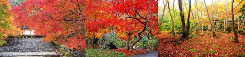 <GOTOを利用して行こう>嵐山・嵯峨野の紅葉の美しいスポットを巡る貸切タクシー日帰りプラン