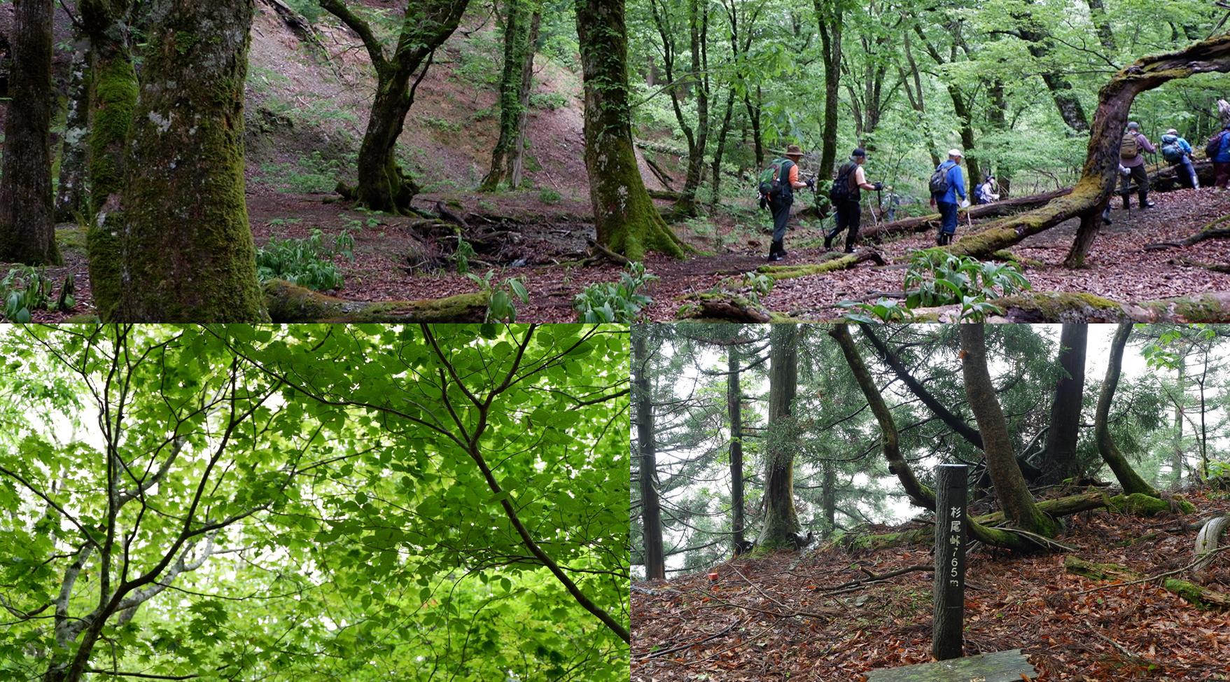 【出発確定!!】緑の美しい季節に!芦生の森ハイキング 18名限定!!